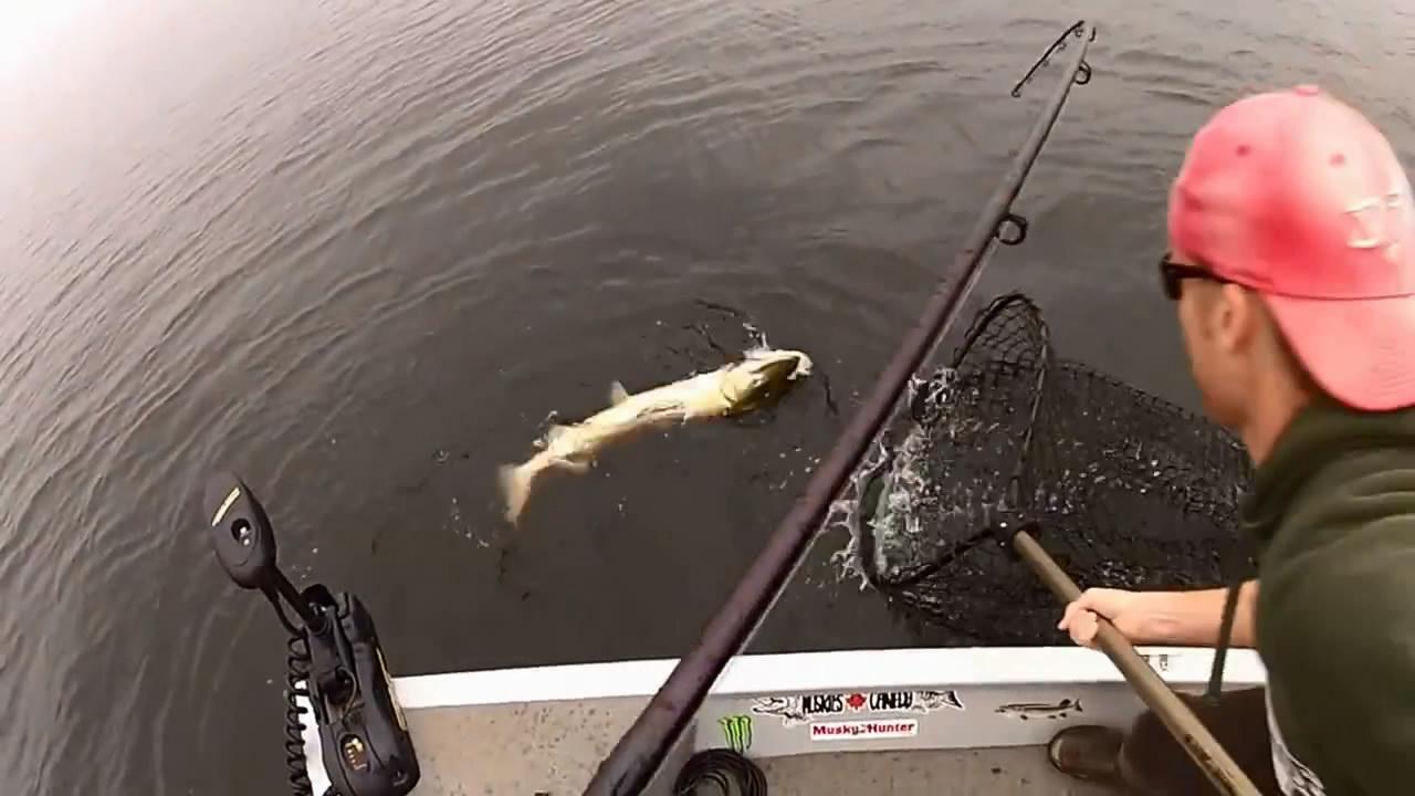видео поклевка рыбы