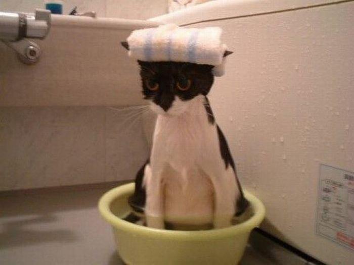 плитка-мозаика ванной очень жарко в квартире чем помочь коту (предварительной) работы лицами