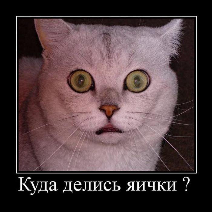 demotivatory_na_pjatnicu_36_foto_24.jpg