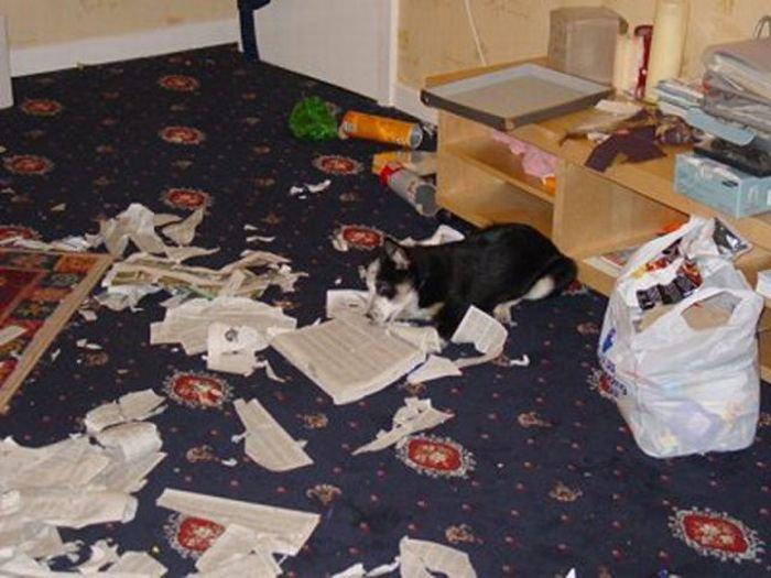 Собака устроила погром в квартире видео