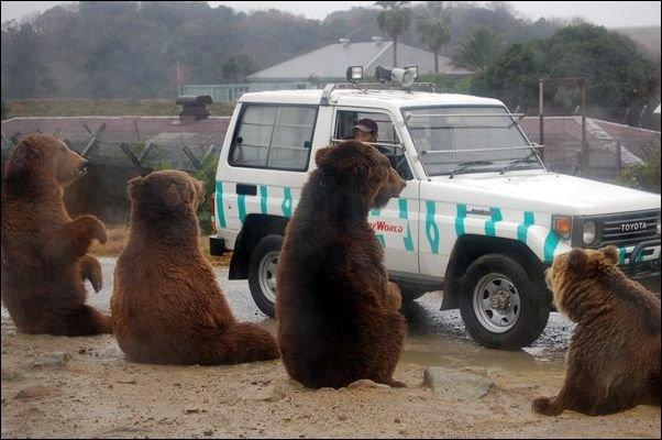Дата: 30 июля 2011 Комментариев. медведи.  Забавные медведи (39 фото)
