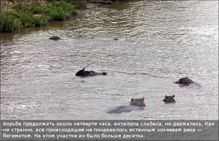 http://zagony.ru/admin_new/foto/2011-9-26/1317031316/spasenie_antilopy_11_foto_4.jpg