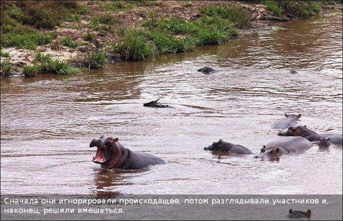 http://zagony.ru/admin_new/foto/2011-9-26/1317031316/spasenie_antilopy_11_foto_5.jpg