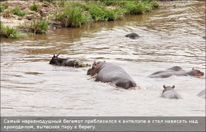 http://zagony.ru/admin_new/foto/2011-9-26/1317031316/spasenie_antilopy_11_foto_6.jpg