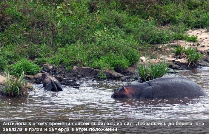 http://zagony.ru/admin_new/foto/2011-9-26/1317031316/spasenie_antilopy_11_foto_9.jpg