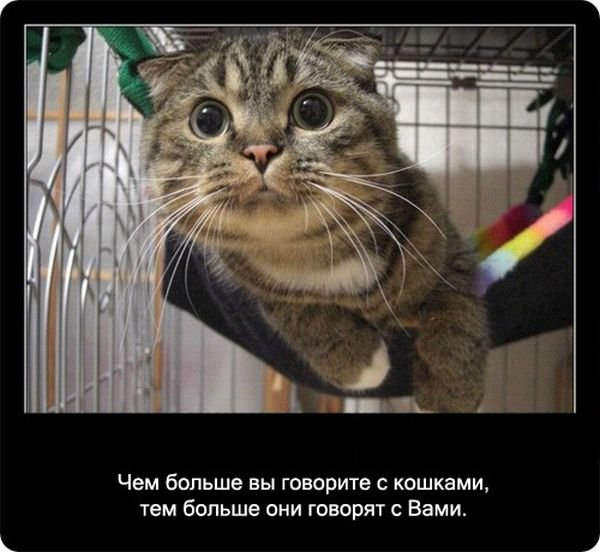 http://zagony.ru/admin_new/foto/2012-1-18/1326880241/fakty_o_koshkakh_90_foto_41.jpg