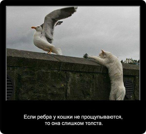 fakty_o_koshkakh_90_foto_50.jpg