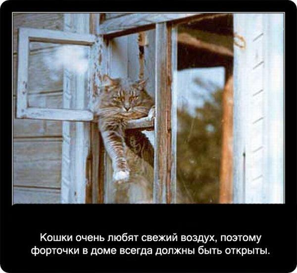 fakty_o_koshkakh_90_foto_71.jpg