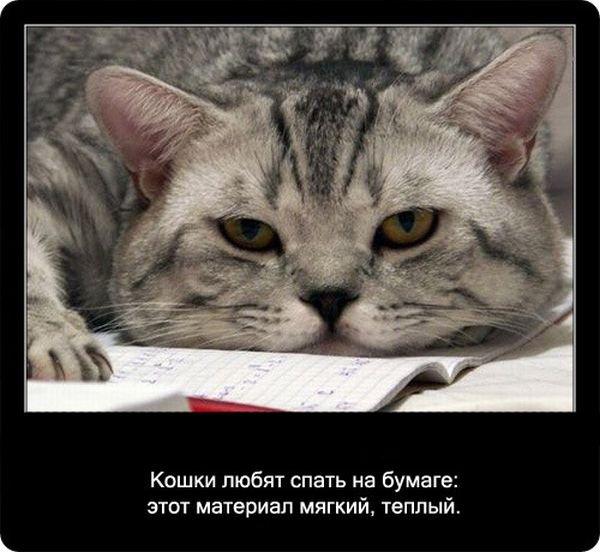 http://zagony.ru/admin_new/foto/2012-1-18/1326880241/fakty_o_koshkakh_90_foto_74.jpg