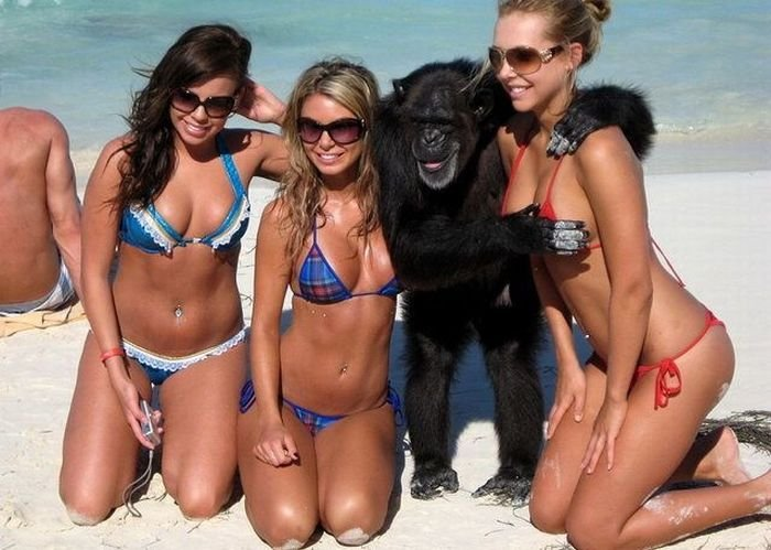 наклейки с обезьянками