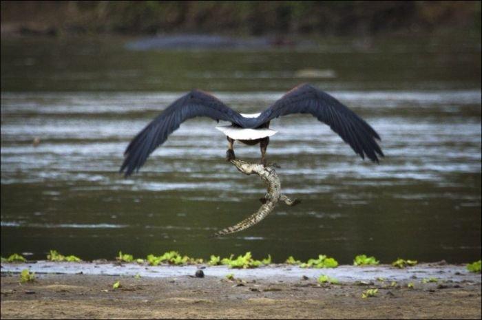 http://zagony.ru/admin_new/foto/2012-10-10/1349864747/poslednjaja_trapeza_krokodila_4_foto_2.jpg