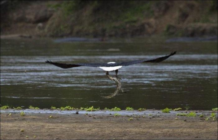 http://zagony.ru/admin_new/foto/2012-10-10/1349864747/poslednjaja_trapeza_krokodila_4_foto_3.jpg