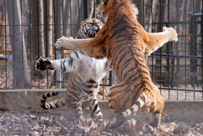 http://zagony.ru/admin_new/foto/2012-10-3/1349257992/fotopodborka_sredy_109_foto_100.jpg