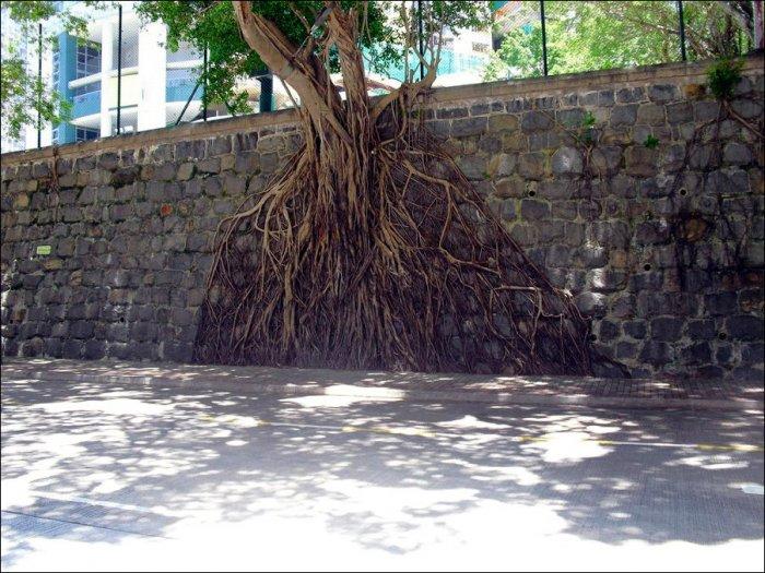 Деревья на стенах (4 фото). Редкое.
