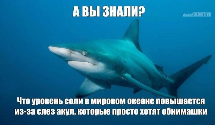 http://zagony.ru/admin_new/foto/2012-6-13/1339581841/fotopodborka_sredy_100_foto_52.jpg