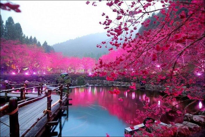 Красоты окружающего нас мира