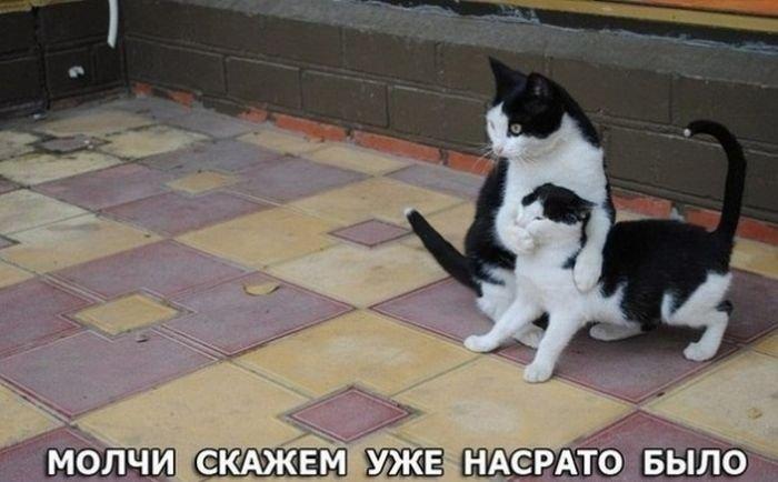 http://zagony.ru/admin_new/foto/2013-10-15/1381819219/fotopodborka_vtornika_109_foto_87.jpg