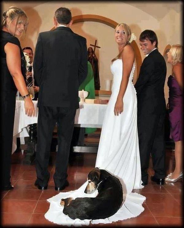 шуточные коменты к свадебным фото станции