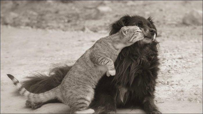 Товарищество котов и псин(31 фото)