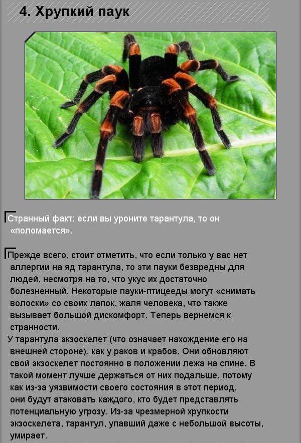 Факты о зоологических(10 фото)