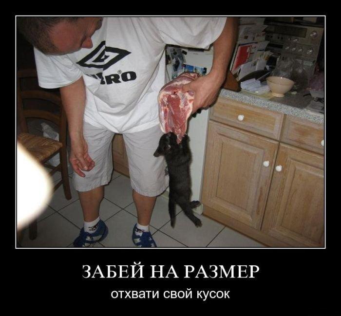 http://zagony.ru/admin_new/foto/2015-10-8/1444325536/demotivatory_na_pjatnicu_30_foto_10.jpg