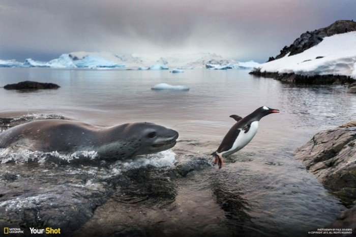������ ���������� 2015 ���� �� National Geographic (40 ����)