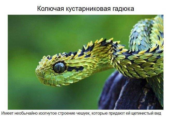 Удивительные животные нашей планеты (37 фото)