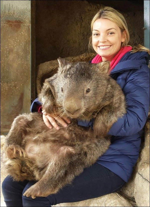 The oldest wombat in the world (8 photos)
