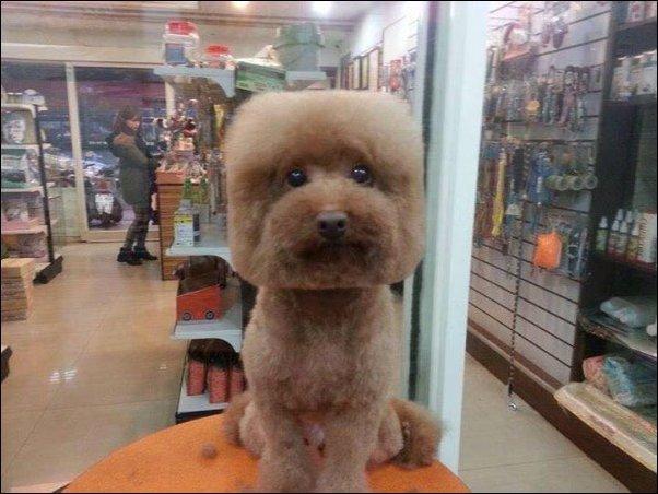 Необычные стрижки собак (7 фото)