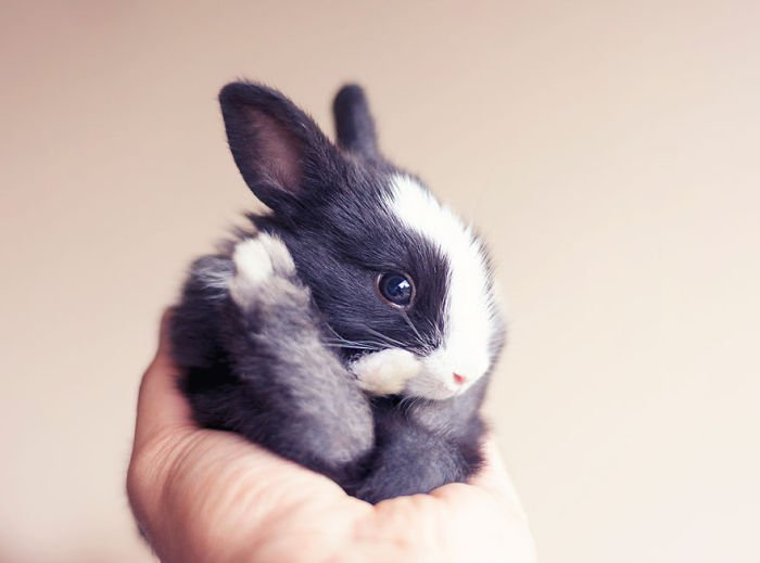 Кролик в первый месяц жизни (16 фото)