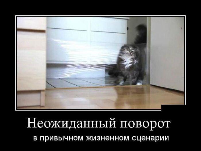 http://zagony.ru/admin_new/foto/2015-8-18/1439885291/demotivatory_na_vtornik_30_foto_14.jpg