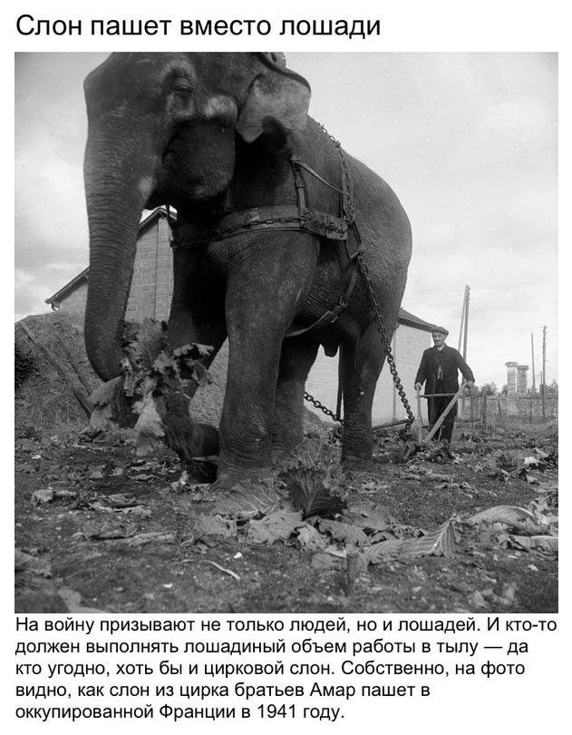 Необычные фотографии Второй мировой войны (9 фото)