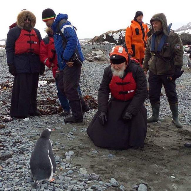 Фотожабы на Патриарха Кирилла и пингвинов (15 фото)