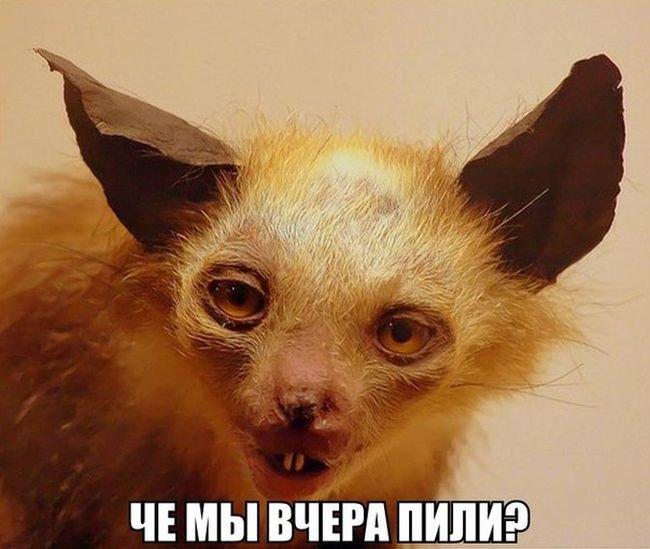 fotopodborka_chetverga_141_foto_49.jpg