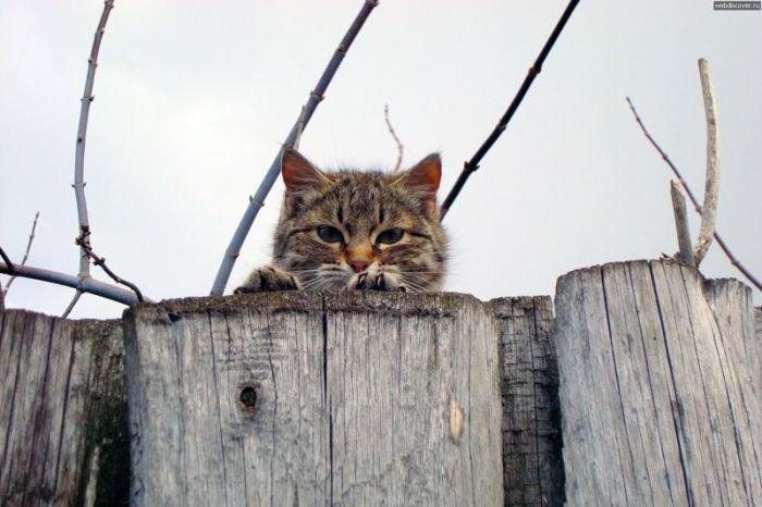 Коты наблюдатели