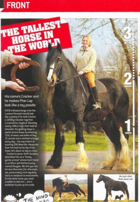 Самые большие лошади в мире (9 фото)