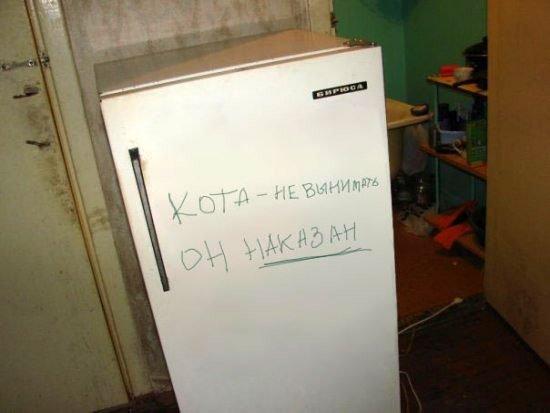 http://zagony.ru/uploads/posts/2009-02/1234453037_kot.jpg