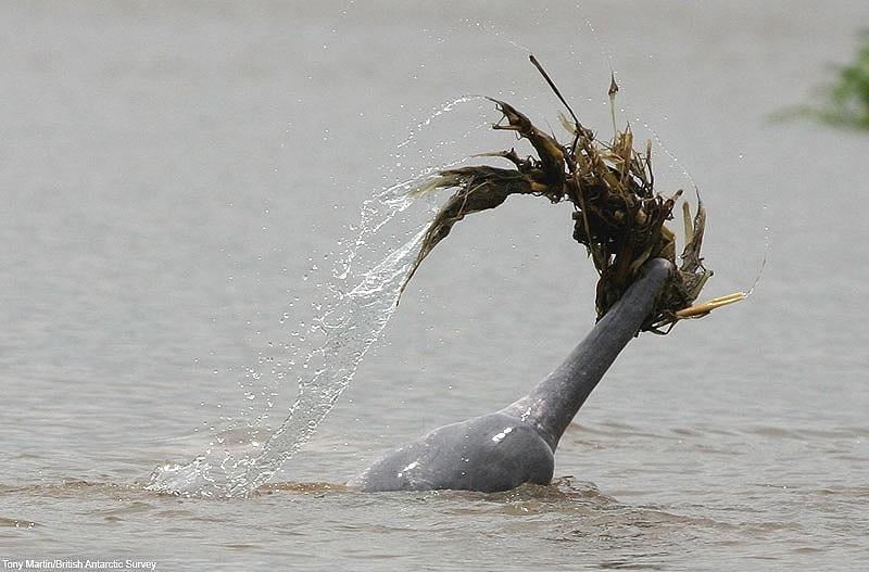 17. Благодаря своей грациозной красоте дельфины стали популярными