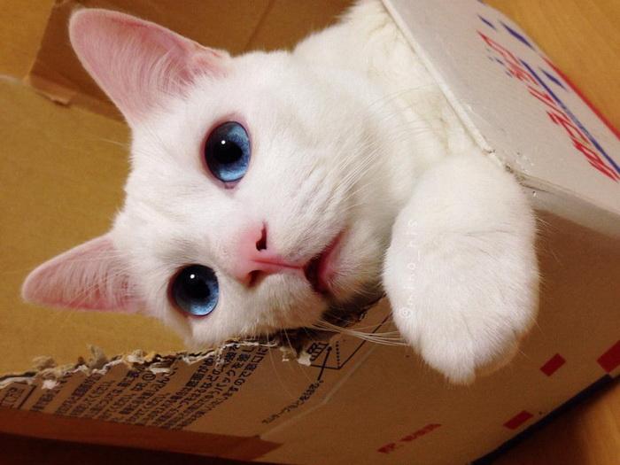 Милый котик (14 фото)