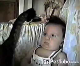 Кот гипнотизирует малыша (1.540 MB)
