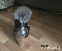 Котенок нашел где прятаться (3.066 MB)