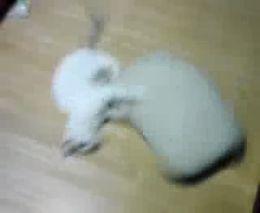 Котик играется с подушкой (1.466 MB)