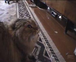 Говорящий котик (6.815 MB)