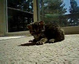 Котенок издает забавные звуки (2.607 MB)