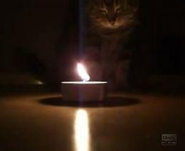 Кот и пламя свечи (2.281 MB)