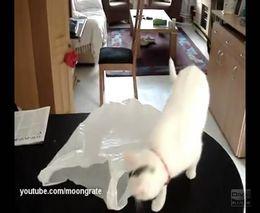 Кот испугался пакета (1.618 MB)