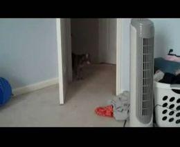Испугали кота (1.361 MB)