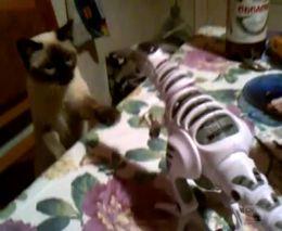 Кошак и робот (1.250 MB)