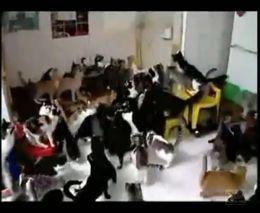 Толпа голодных кошаков (2.203 MB)