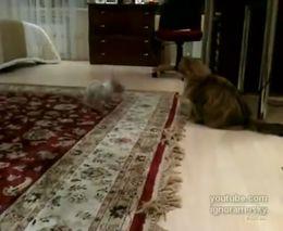 Маленькая собачка достает кота (7.436 MB)